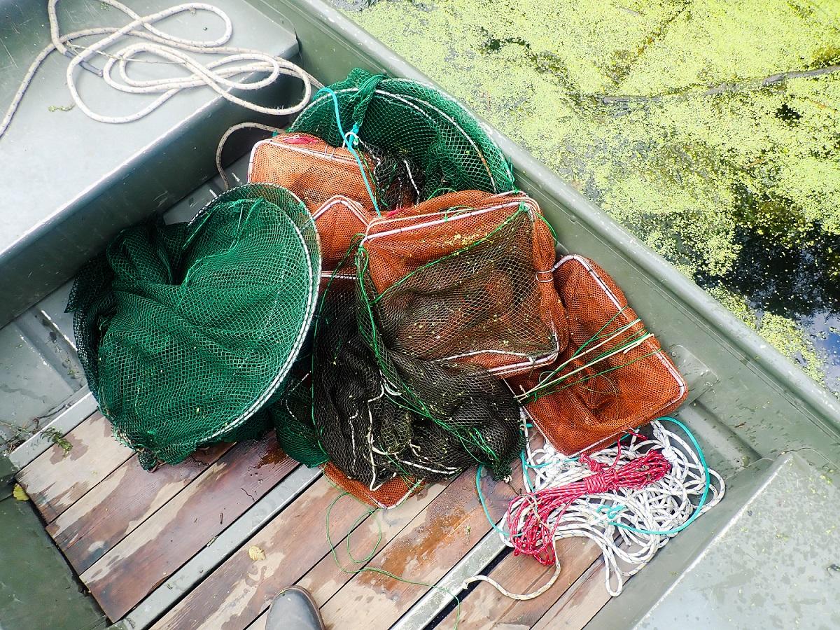 Fischbestandserfassung im Spreewald